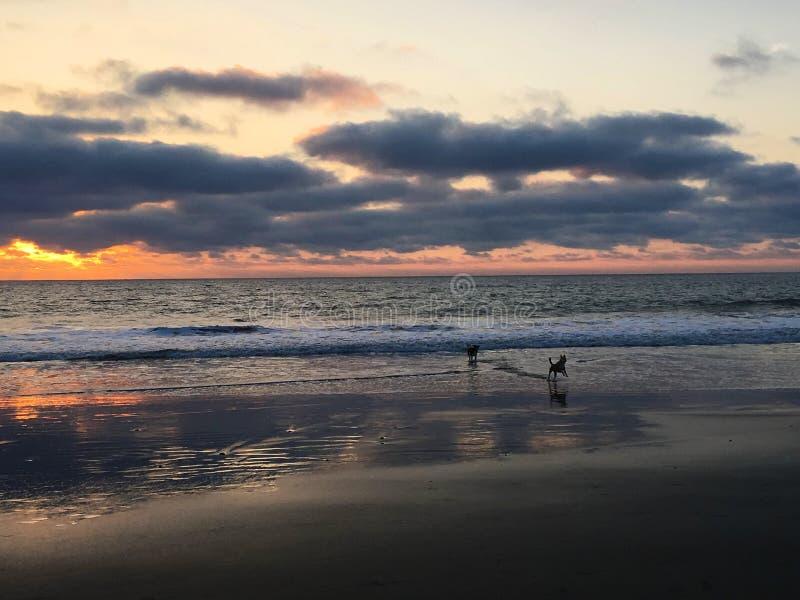 Dwa psów bieg na plaży w Ekwador obraz stock