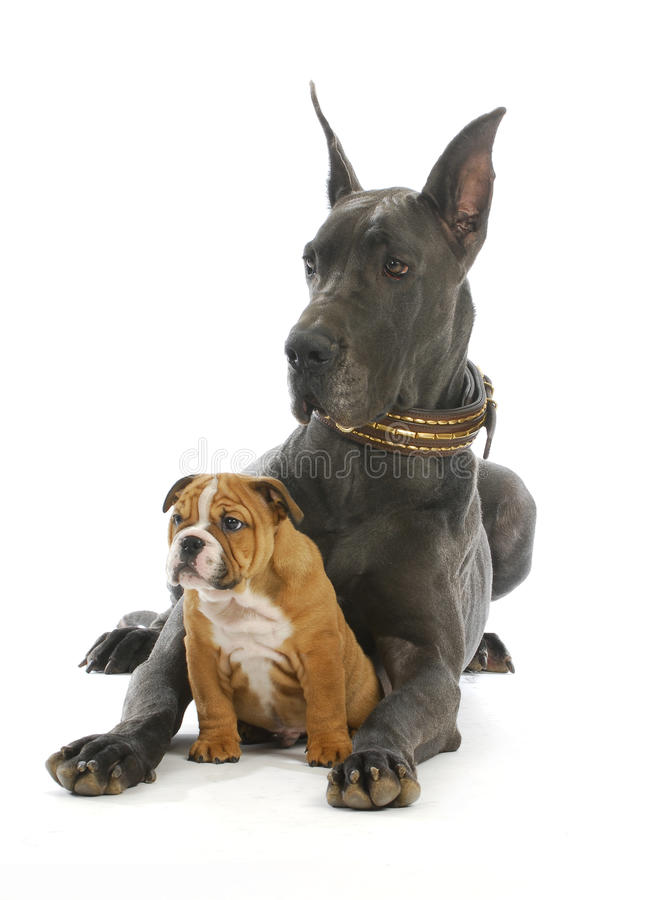 Dwa psa zdjęcie royalty free
