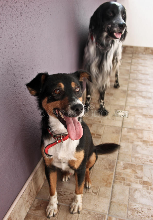 Dwa psa czeka lunch obrazy royalty free