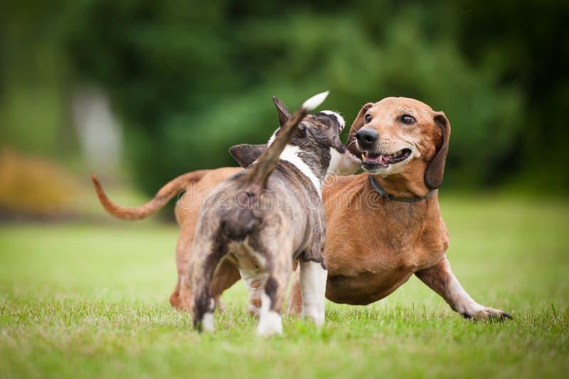dwa psy zdjęcia royalty free
