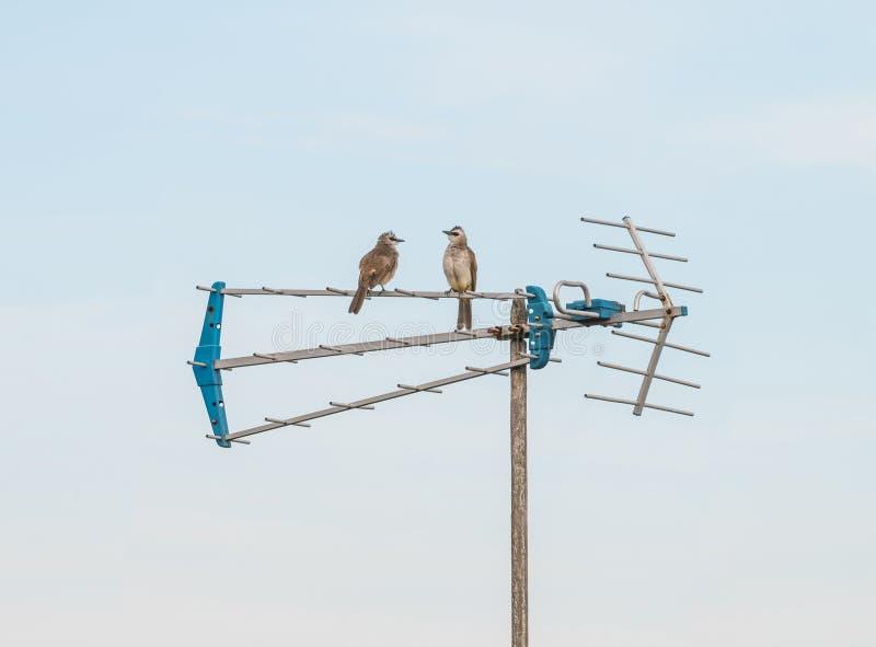 Dwa ptaka Siedzi na antenie zdjęcie royalty free