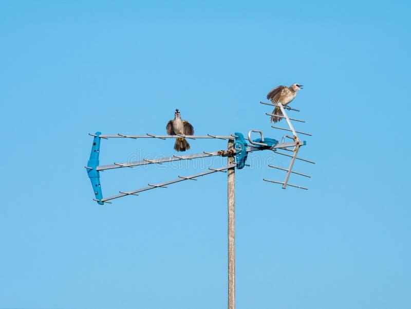 Dwa ptaka Siedzi na antenie zdjęcie stock