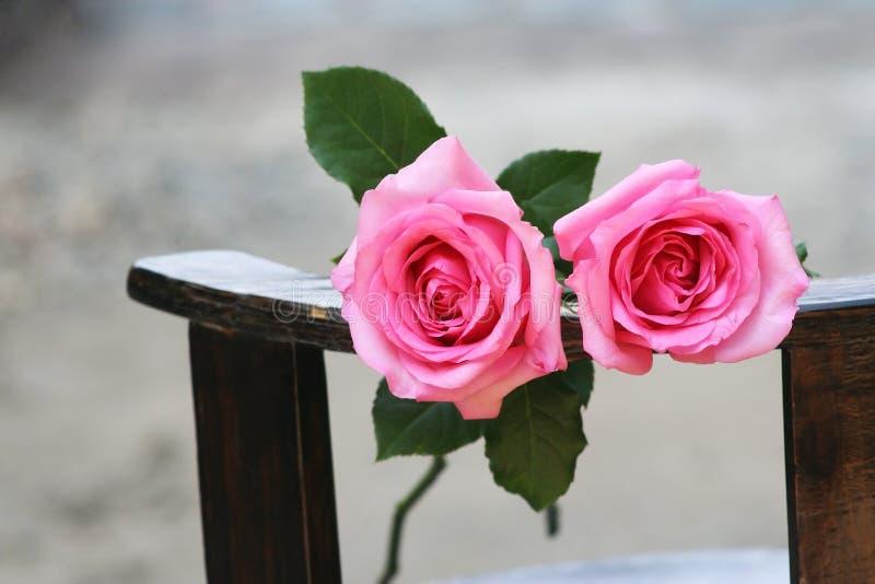 Dwa róż różowy tło zdjęcie stock