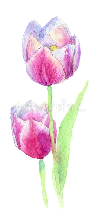 Dwa różowej czerwonej róży dekoracyjni akwarela kwiaty kwiecista ilustracja, liść i pączki, Botaniczny skład dla poślubiać ilustracja wektor