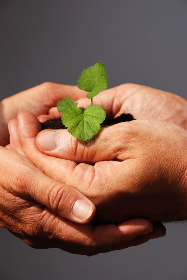 Dwa ręki trzyma rośliny zdjęcie stock