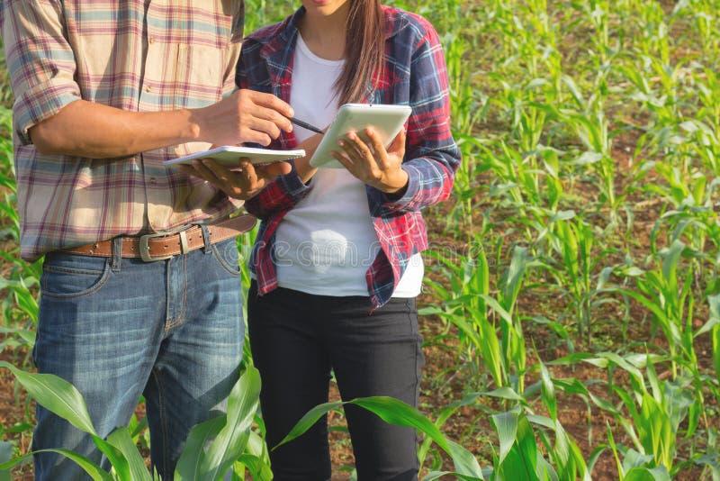 Dwa rolniczego badacza studiują przyrosta kukurydzane śliwki zdjęcie royalty free
