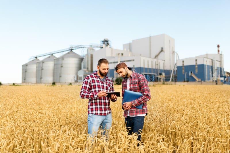 Dwa rolników stojak w pszenicznym polu z pastylką Agronomowie dyskutują żniwo i uprawy wśród ucho banatka z adrą obrazy royalty free