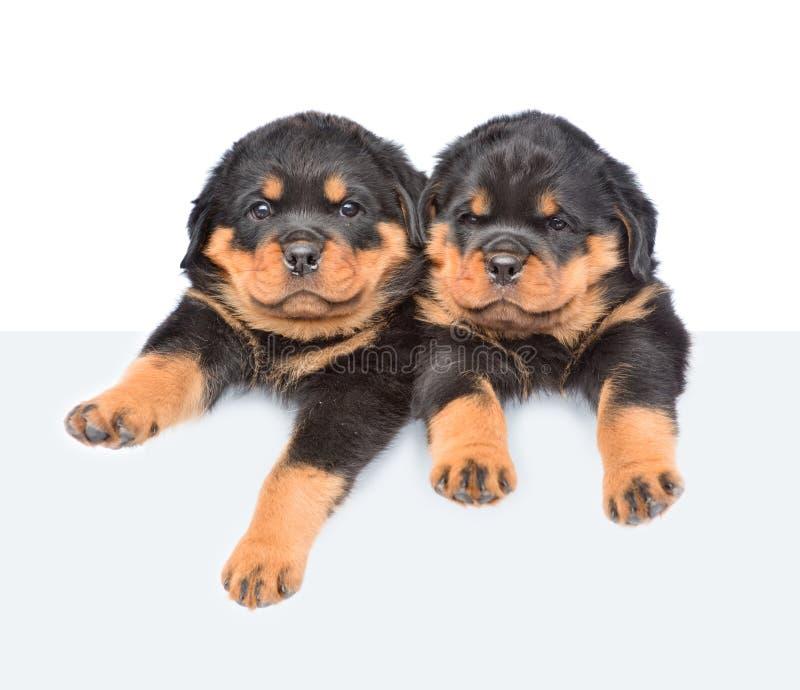 Dwa Rottweiler szczeniaków zerkania od behind opróżnia deskę Na biel zdjęcie royalty free