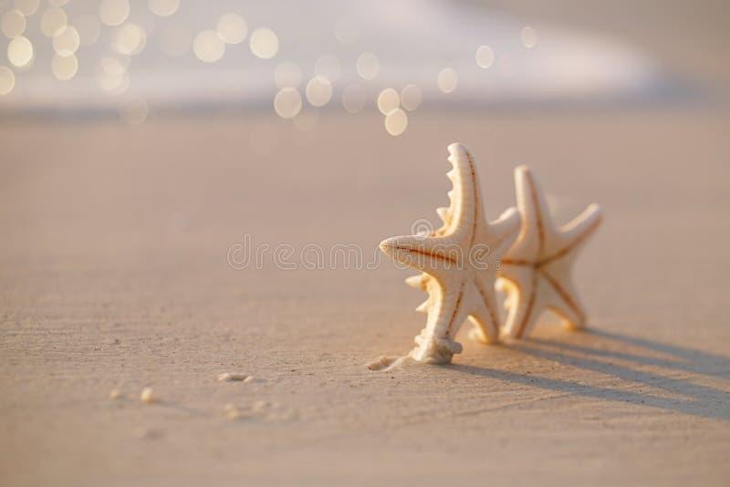 Dwa rozgwiazda na dennej ocean plaży w Floryda, miękki delikatny wschód słońca zdjęcia stock