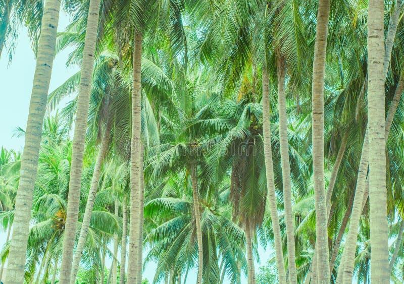 Dwa rzędu drzewka palmowe rozciąga daleko od zdjęcia royalty free