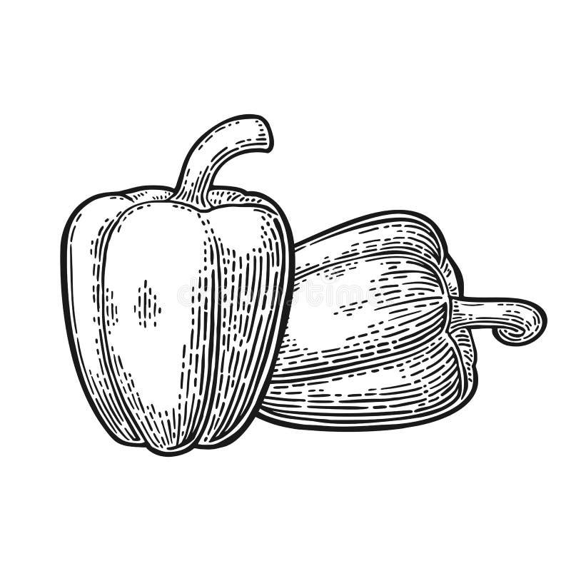 Dwa słodkiego dzwonkowego pieprzu Wektorowy rocznik grawerująca ilustracja ilustracji