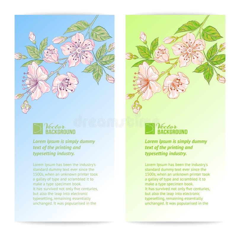 Dwa Sakura sztandaru. royalty ilustracja
