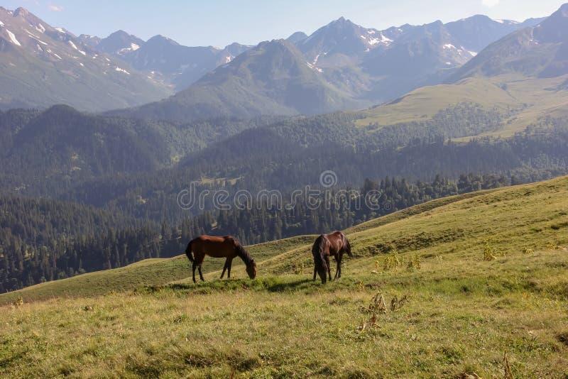 Dwa samotnego konia na halnej łące obraz stock