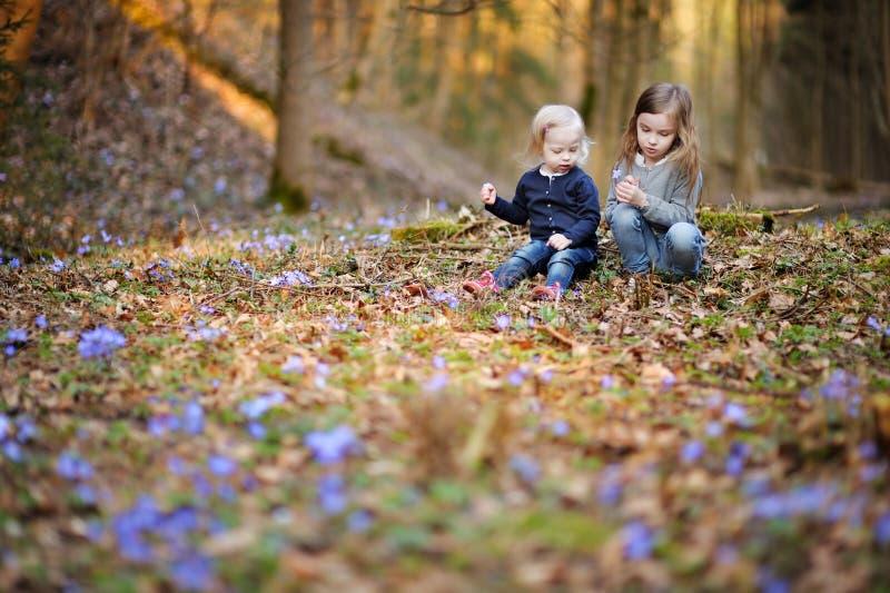 Dwa siostry podnosi pierwszy kwiaty wiosna obraz stock