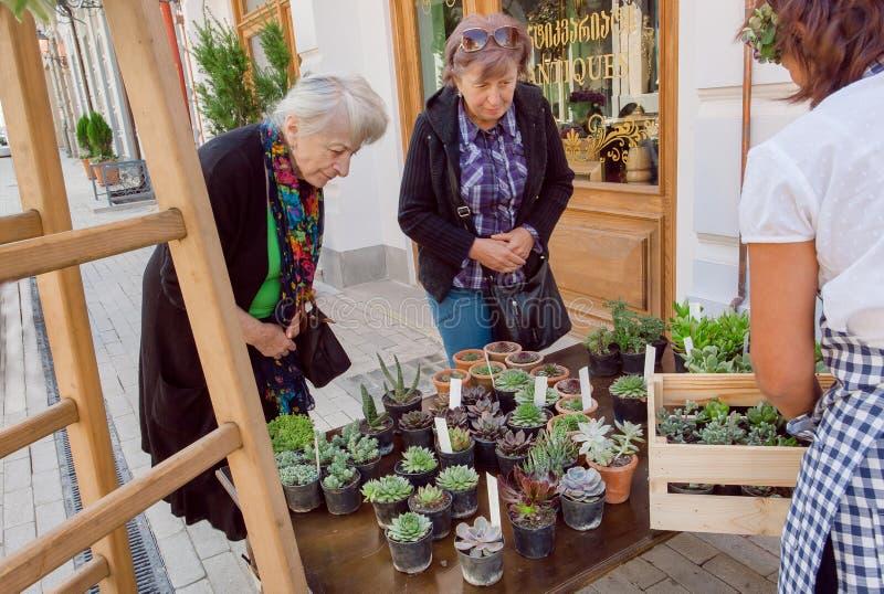 Dwa starszej damy wybierają różnorodnych kaktusy w garnkach i sukulentach w ulicznym kwiatu sklepie zdjęcia stock