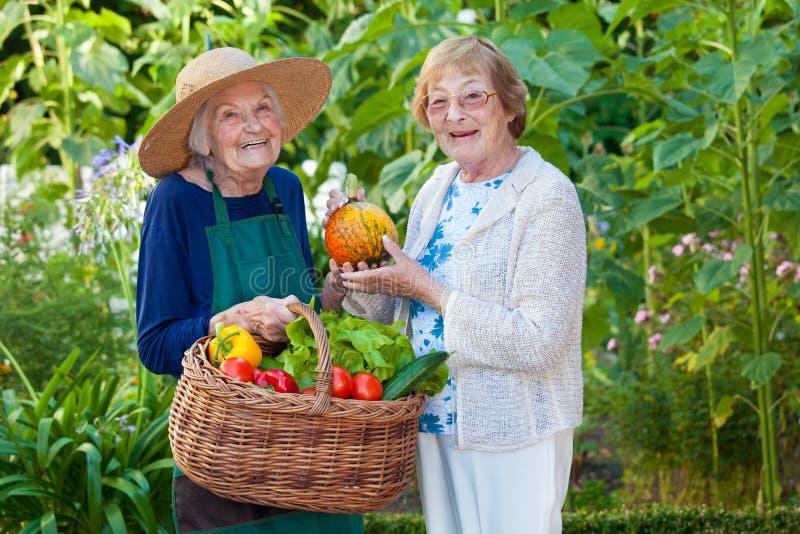Dwa Starszej kobiety przy gospodarstwem rolnym z Świeżymi warzywami fotografia stock