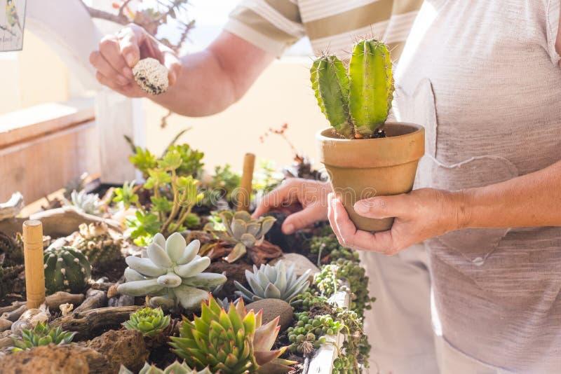 Dwa starszej osoby biorą opiekę o roślinach w tarasie obrazy stock