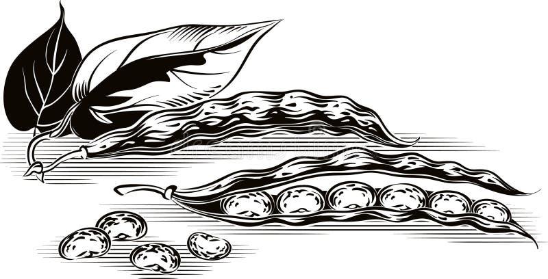 Dwa strąka fasole ilustracji