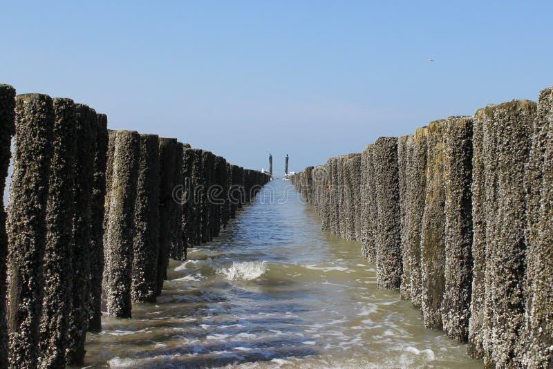Dwa symmetric rzędu plażowi słupy w morzu w Zeeland, Holland w wiośnie obraz stock