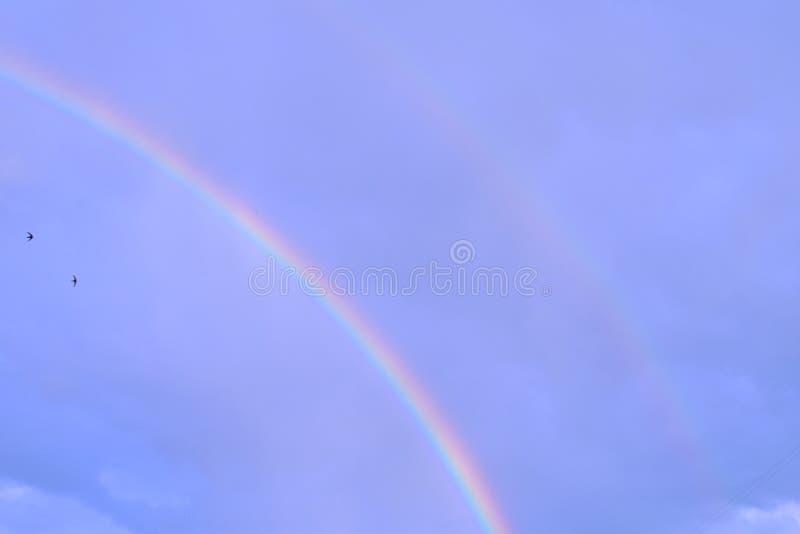 Dwa tęczy w niebie z dwa ptakami zdjęcie royalty free