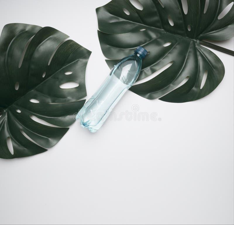 Dwa tropikalnego liścia na białym tle z butelką woda i miejsce dla teksta mieszkania nieatutowego fotografia royalty free