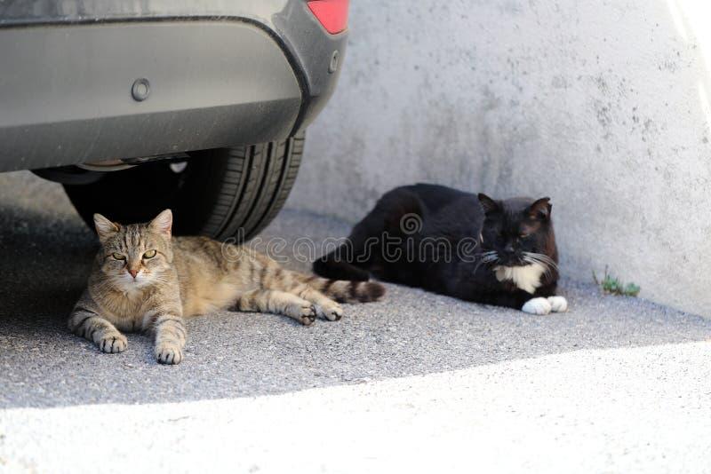 Dwa ulic kota lying on the beach Pod samochodem obrazy royalty free