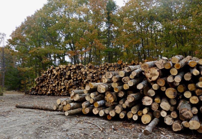 Dwa wielkiej sterty Maine bele przed drzewami fotografia royalty free