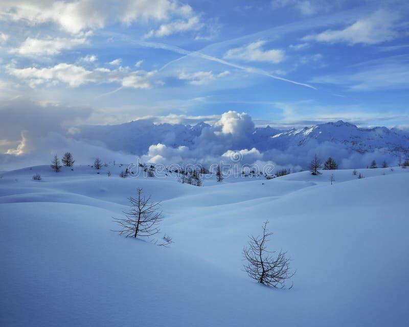 Dwa zimy osamotnionego śnieżnego jedlinowego drzewa na zbocza góry niebieskiego nieba tle obraz stock