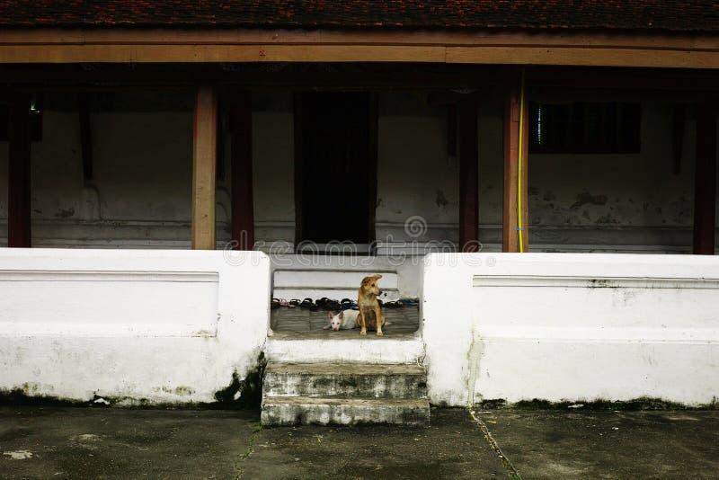 dwa zwierzęcia domowego śliczny spokojny pies czeka na zewnątrz monasteru dormitorium budynku obrazy royalty free