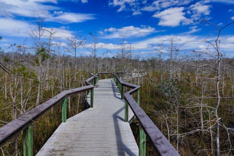 Dwarf Cypress Boardwalk, Everglades royalty free stock photography