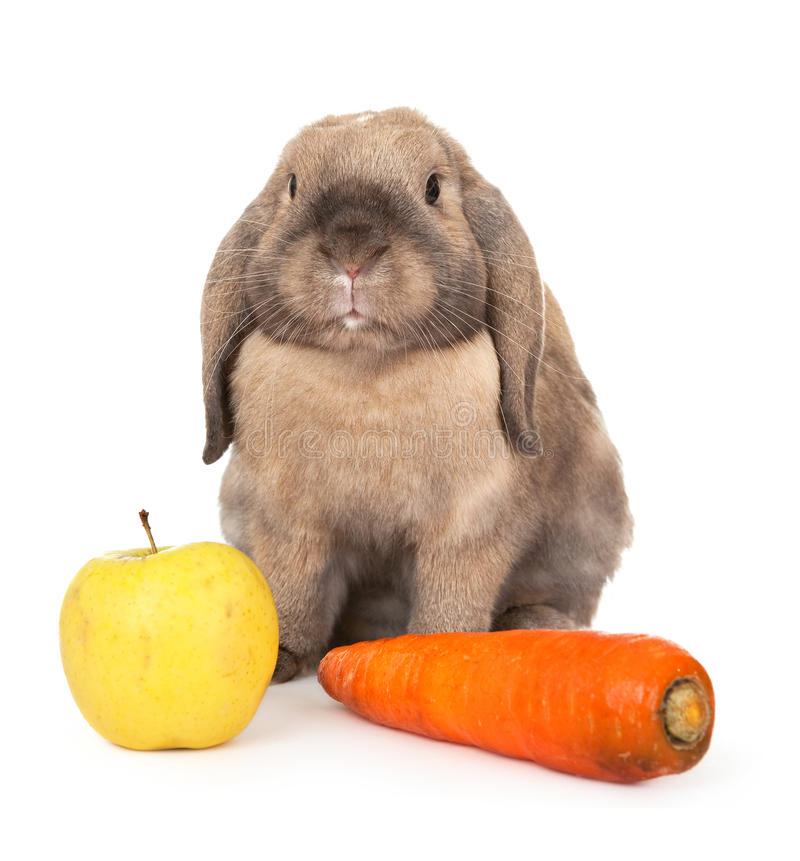 Dwarf rabbit with carrots and apple. In the Oriental calendar 2011 - the year of rabbit stock image