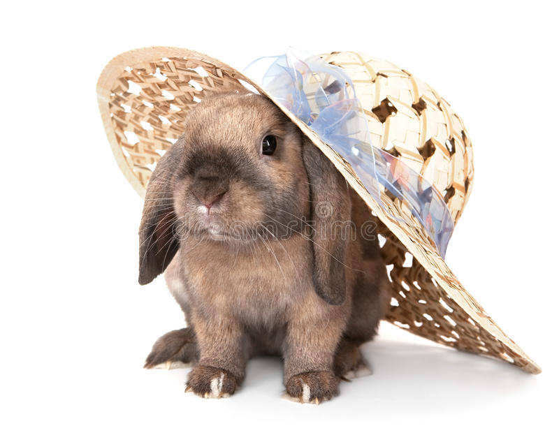 Dwarf rabbit in a straw hat. In the Oriental calendar 2011 - the year of rabbit royalty free stock photos