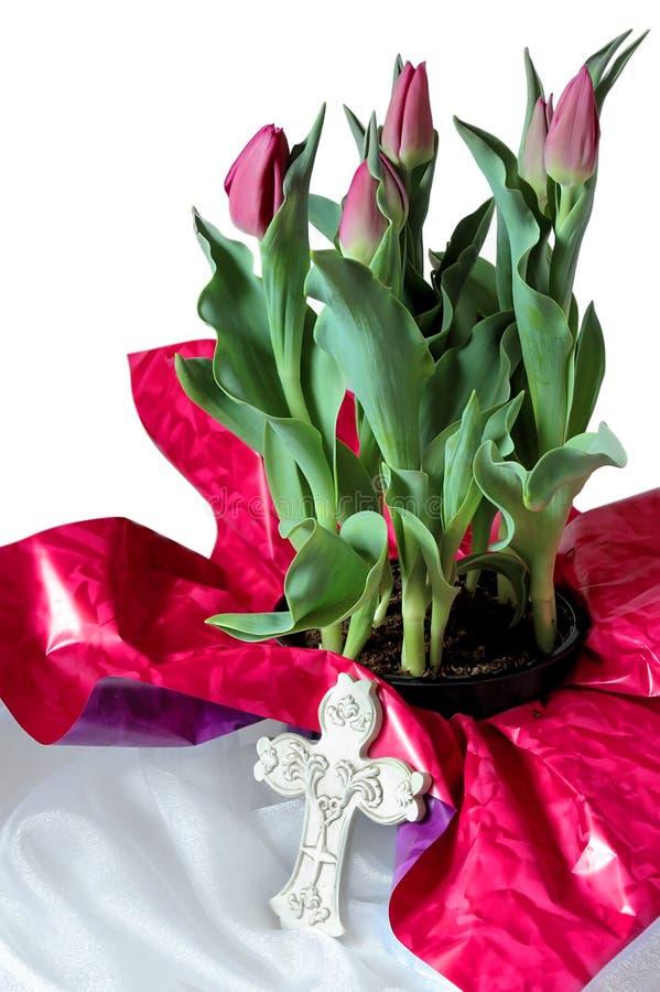Dwars en roze tulpen stock foto