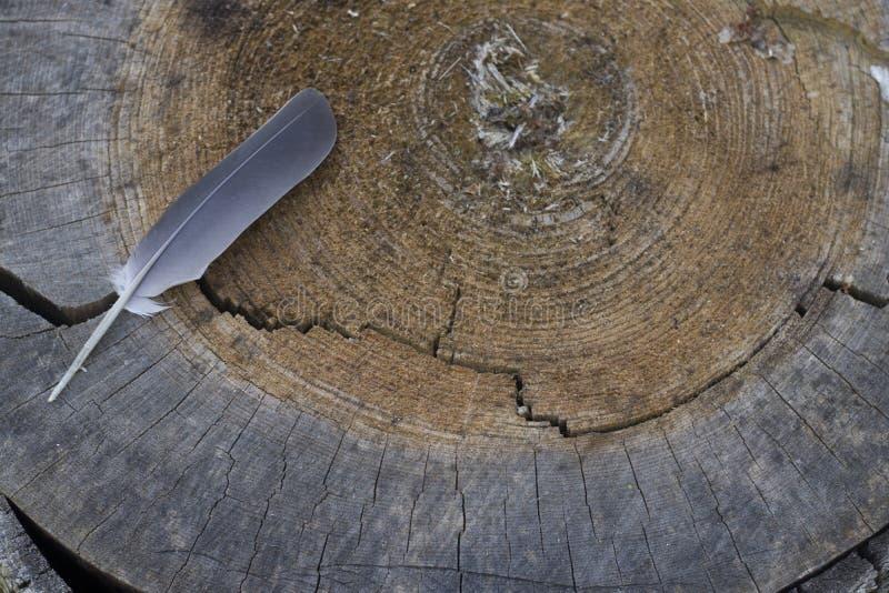 Dwarsdoorsnede van de boom en de veer stock foto