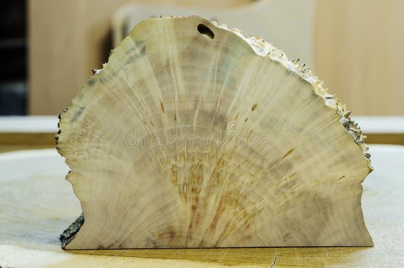 Dwarsdoorsnede van de opeenhoping op de boomstam van de berk stock foto