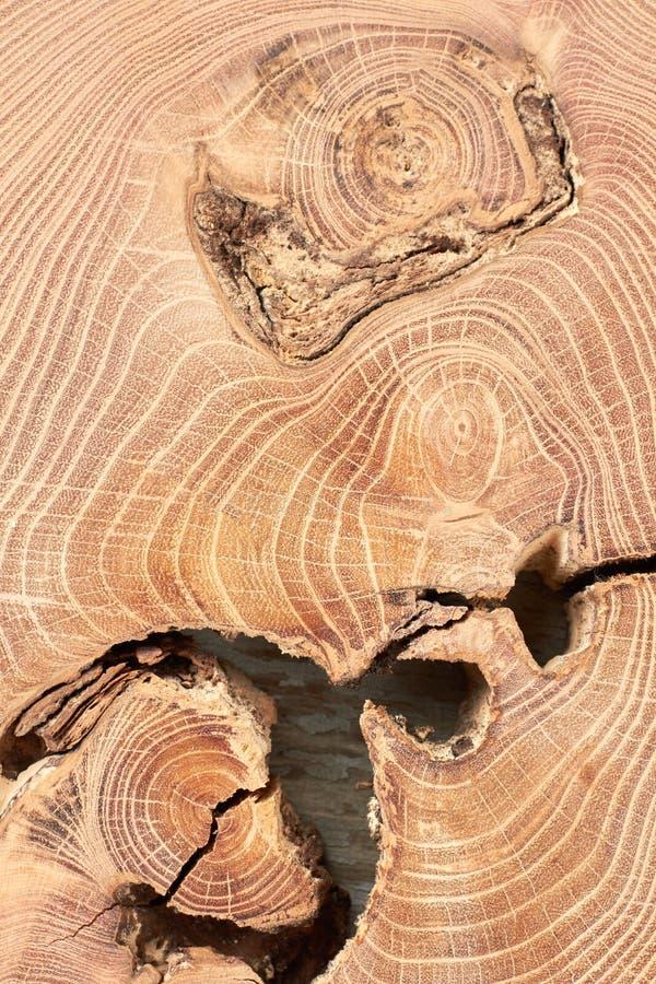 Dwarsdoorsnede van dichte omhooggaand van de boomboomstam royalty-vrije stock foto's