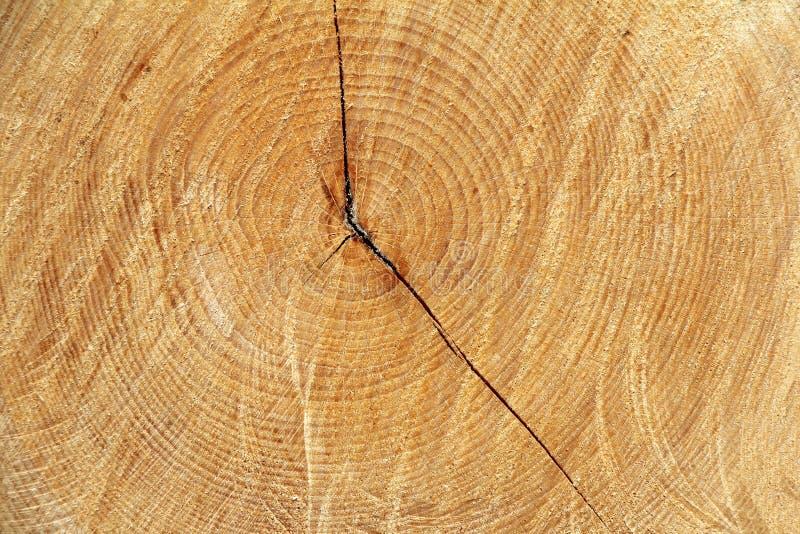 Download Dwarsdoorsnedeboom stock foto. Afbeelding bestaande uit sectie - 39110588