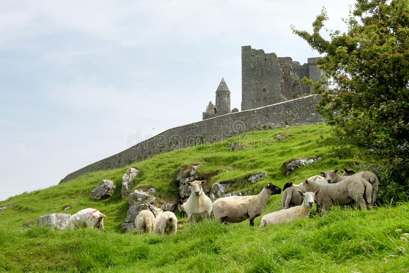 Dwayne Johnson di Cashel, contea Tipperary in Irlanda fotografia stock