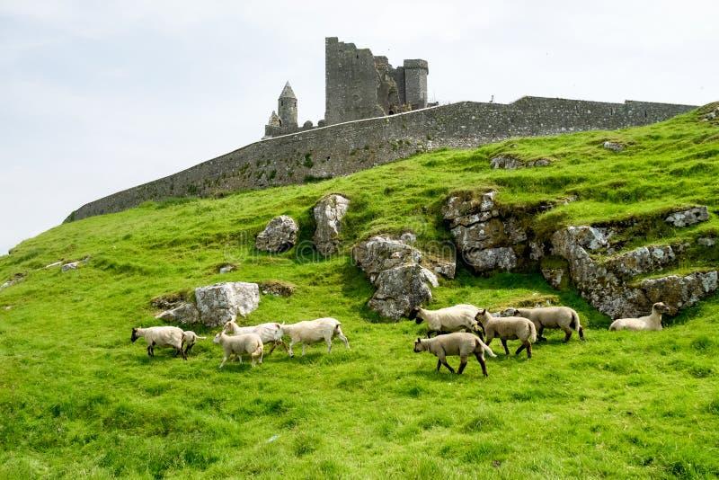 Dwayne Johnson di Cashel, contea Tipperary in Irlanda fotografia stock libera da diritti