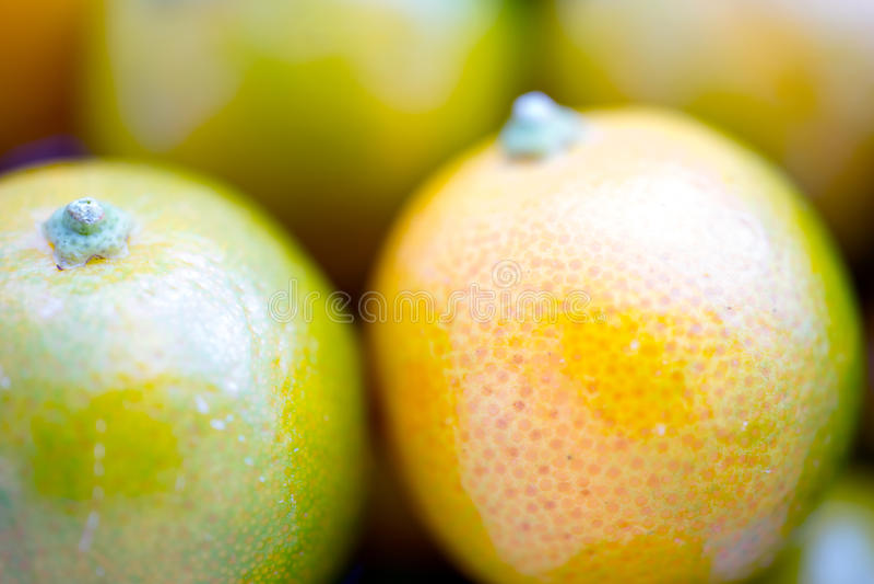 Dwergcalamondin-Fruitmacro stock foto