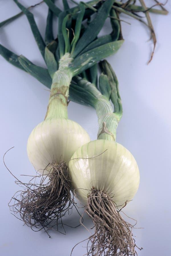 Download Dwie cebule obraz stock. Obraz złożonej z cebule, korzenie - 40329