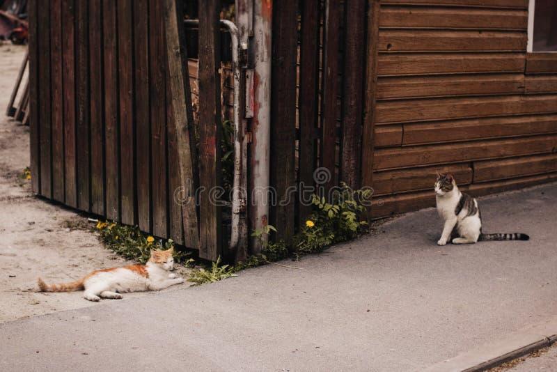 Dwie koty stożkowe pomarańczowo-brązowe na nawierzchni z betonu szarego zdjęcia royalty free
