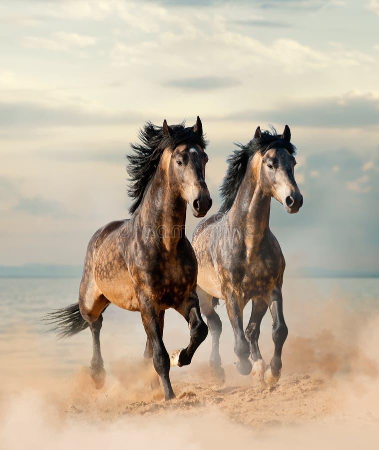 dwie piękne konie obrazy stock