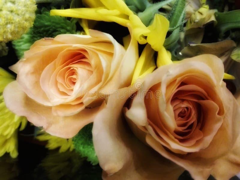 dwie róże obraz stock