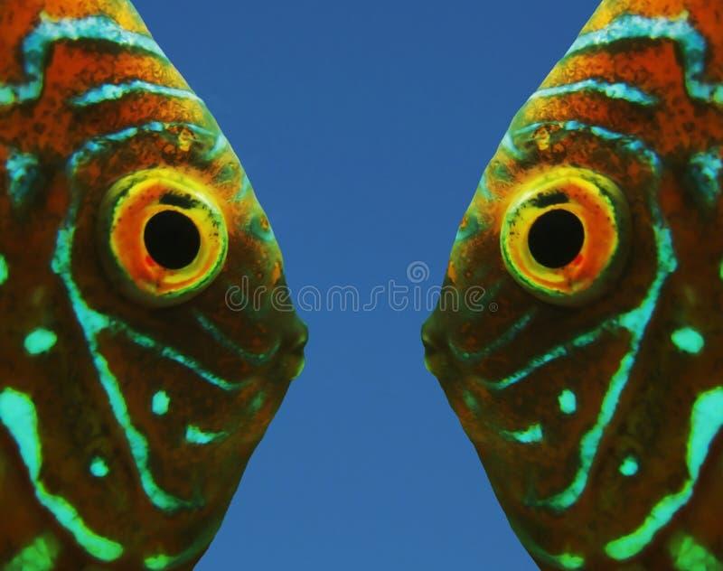 dwie ryby fotografia stock