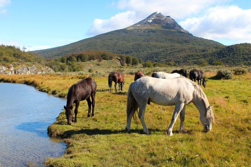 DWild-Pferde in einer wunderbaren Patagonian Landschaft lizenzfreie stockfotografie