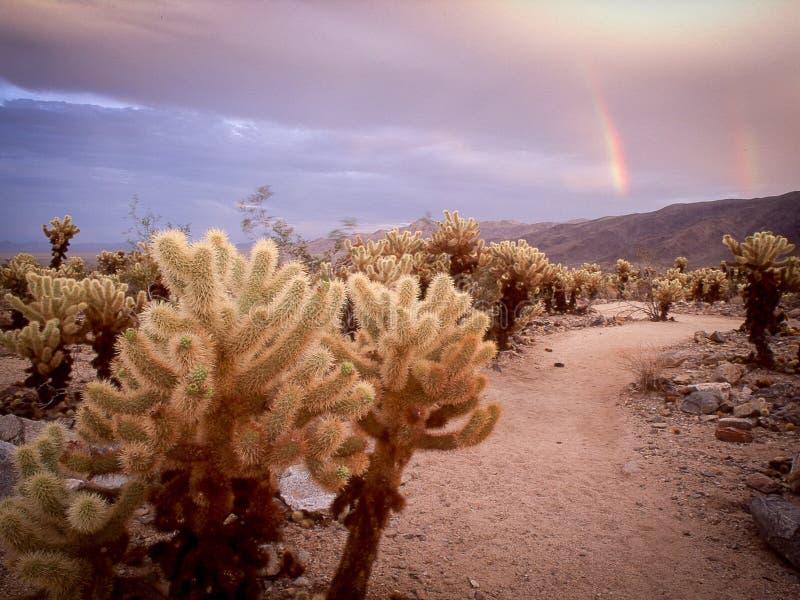 Dwoista tęcza nad Cholla kaktusa ogródem, Joshua drzewo zdjęcie royalty free