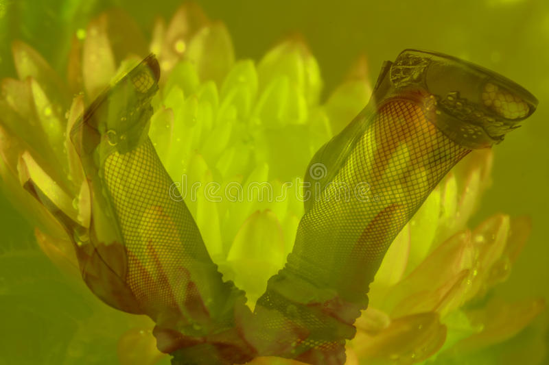 Dwoistego ujawnienia kobiety szpilki z kwiatu tłem i nogi zdjęcia royalty free