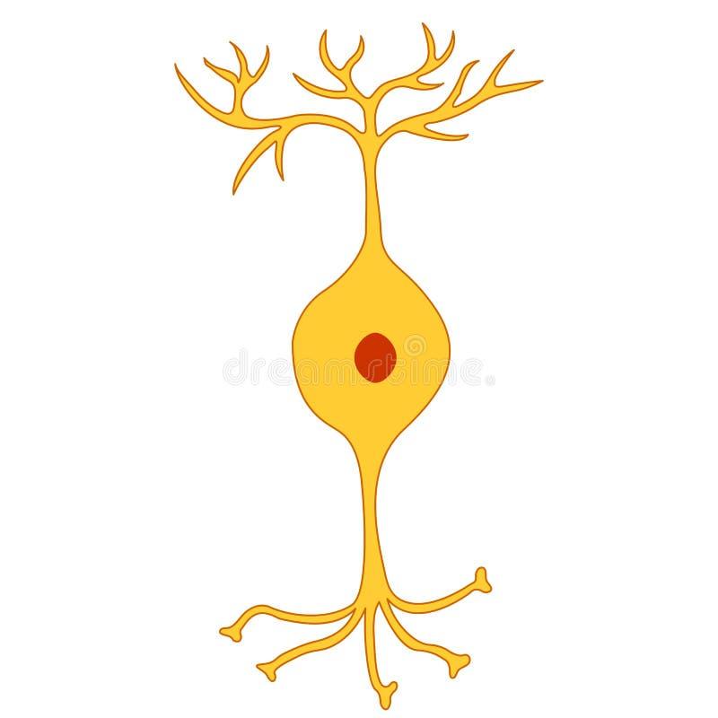 Dwubiegunowy neuron, nerw komórki neuron ilustracji