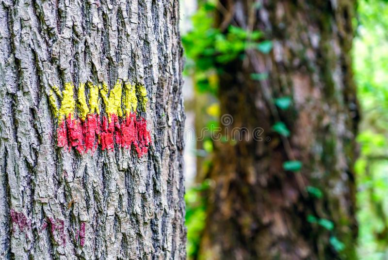 Dye painted sign on tree trunk in summer forest indicating tourist hiking path or trail. Route mark as natural background for acti royalty free stock photo